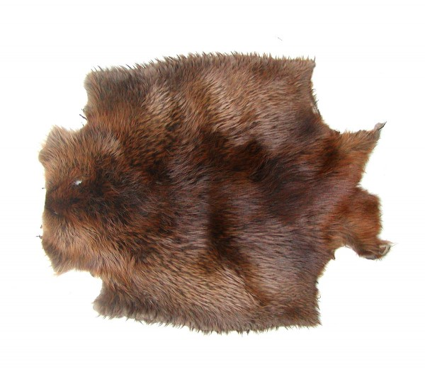 sehr großes exklusives kanadisches Wildfell Biberfell braun, super Dekorationsfell, ca. 80x60 cm